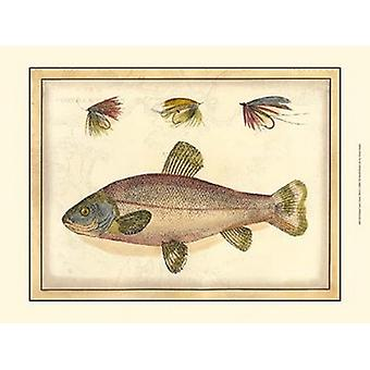 Printed Toms Trout Poster Print (19 x 13)