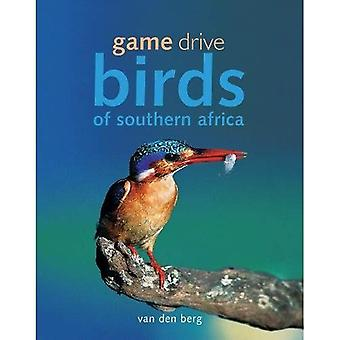 Game Drive Birds of Souhern Africa