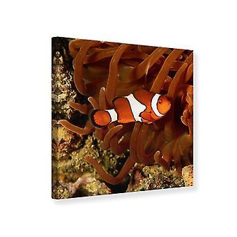 Lona impresión Nemo