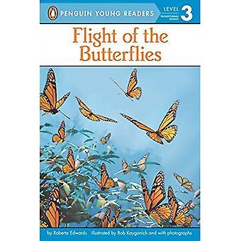Vol des papillons