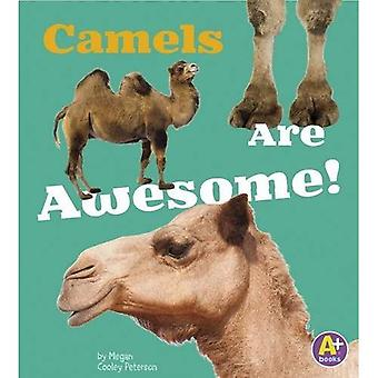 Camels Are Awesome! (Awesome Asian Animals)