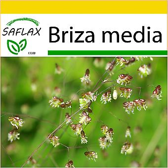 Saflax - Potting Set - 75 seeds - Quaking Grass - Amourette commune - Tremolina - Corazones - Herz-Zittergras / Jungfernhaar