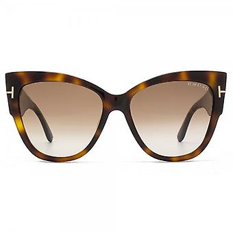 Tom Ford Anoushka Sunglasses In Blonde Havana