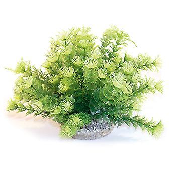 Sydeco natürlichen Pflanzen Marina Schüssel 21cm (4-er Pack)