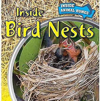 Inside fågelbon (insidan djur bostäder)