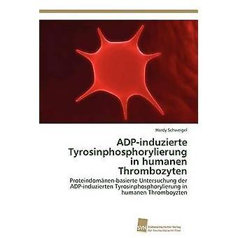 ADPinduzierte Tyrosinphosphorylierung in humanen Thrombozyten by Schweigel Hardy