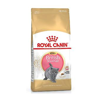 Royal Canin British Short Hair Kitten Food