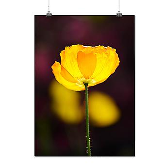 Matte or Glossy Poster with Flower Picture Art Nature Nature Life | Wellcoda | *q1067