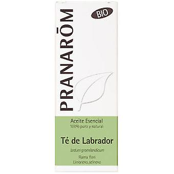 Pranarom Labrador Tea Essential Oil