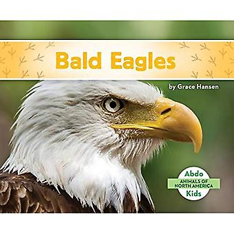 Bald Eagles (Animals of North America)