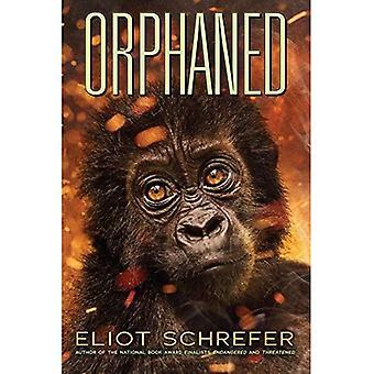 Orphaned (Ape Quartet)