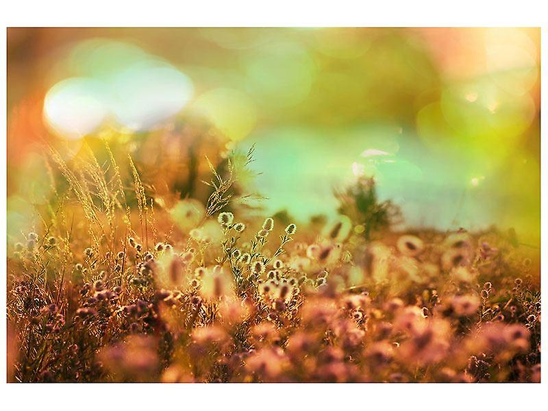 Canvas Print Flower Meadow At Twilight