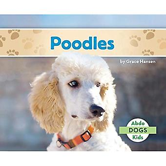 Poodles (Abdo Kids: Dogs)