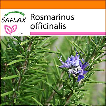 Saflax - Garden in the Bag - 100 seeds - Rosemary - Romarin - Rosmarino - Romero blanco - Echter Rosmarin