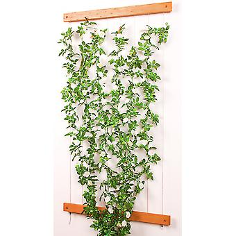 Rope rank help trellis climbing help GROW UP with strips of wood real wood stainless steel 80 x 200 cm