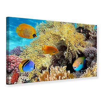 Canvas Print Fish Wealth
