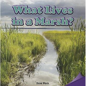 What Lives in a Marsh? by Dave Mack - 9781477725795 Book