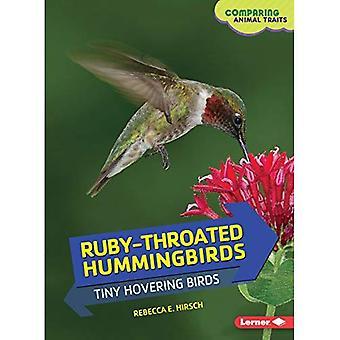 Colibri à gorge rubis –: Petits oiseaux planant (en comparant les Traits animaux)
