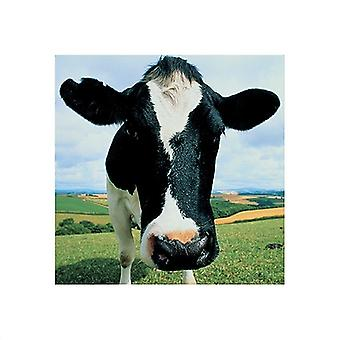 Cow Poster Print by Peter Cade (16 x 16)