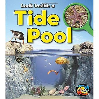 Tide Pool: Look Inside (Heinemann First Library: Look Inside)
