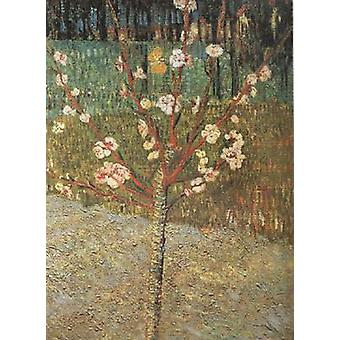 Almond Tree in Blossom,Vincent Van Gogh,48.5x36cm