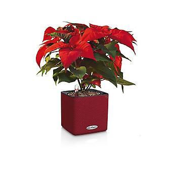 Lechuza Flowerpot Cube Color 14 Scarlet Red