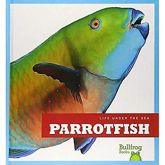 Parrotfish (Life Under the Sea)