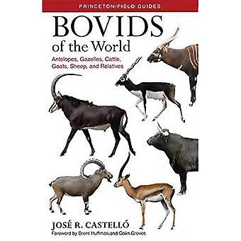 Bovídeos do mundo: antílopes, gazelas, bovinos, caprinos, ovinos e parentes - guias de campo de Princeton