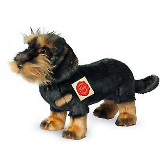 Hermann Teddy Cuddle Dog wirehaired Dachshund