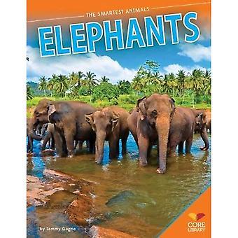 Elefanter (smartaste djur)