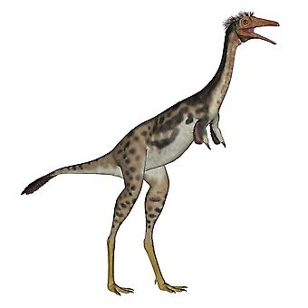 Mononykus-dinosaurus permanent witte achtergrond Poster Print