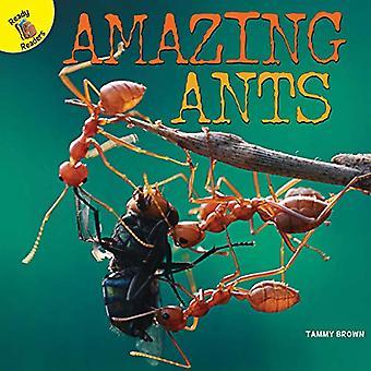 Geweldige mieren (planten, dieren en mensen)