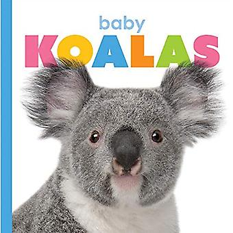 Baby Koalas (Starting Out)