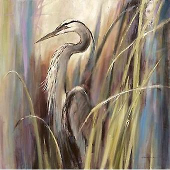 Coastal Heron Poster Print by Brent Heighton
