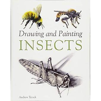 Dibujo y pintura de insectos