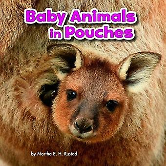Baby Animals in Pouches (Little Pebble: Baby Animals and Their Homes)