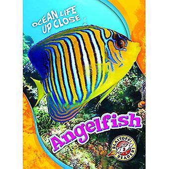 Angelfish (Ocean Life Up Close)